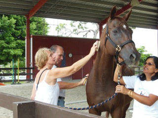 horse-therapy-17