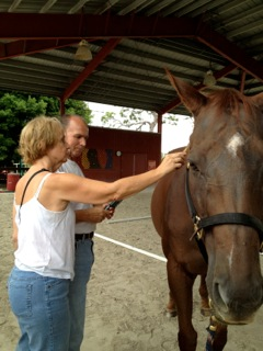 horse-therapy-21